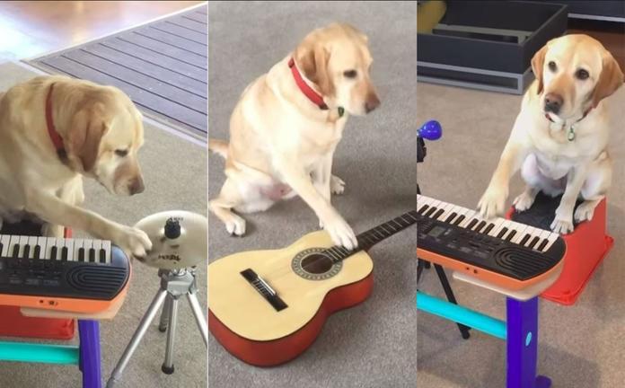Perrita toca la guitarra, el piano y la batería: VIDEO