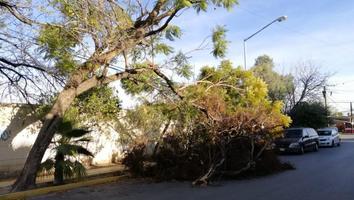 Reportan árbol a punto de caer en la colonia San Jorge