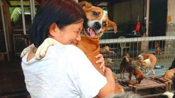 Rescata más de mil 400 perritos de ser comidos [FOTOS]