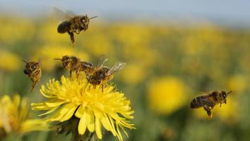Formas en las que puedes ayudar a salvar a mariposas, abejas y colibríes tras la helada