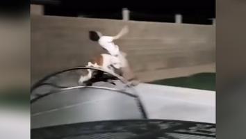 VIDEO: ¡Esa es de VAR juez! Perrito derriba a niño que jugaba futbol
